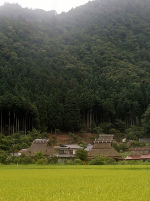 かやぶきの里 美山町北村<br /><br /> その家々の向こう側には、山と森が迫ってます・・・山崩れが、気に成らないものか・・・?・・・まあ、外国だと、みんな、もっとすごい所に住んでますけどね・・・木が、たくさん生え、根が這ってるだろうし・・・大丈夫でしょうね・・・?