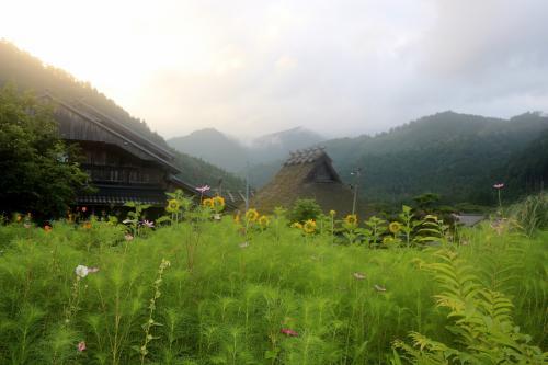 かやぶきの里 美山町北村<br /><br /> まだ8月の2日、ちよっと、気の早いコスモスが咲いてます・・・
