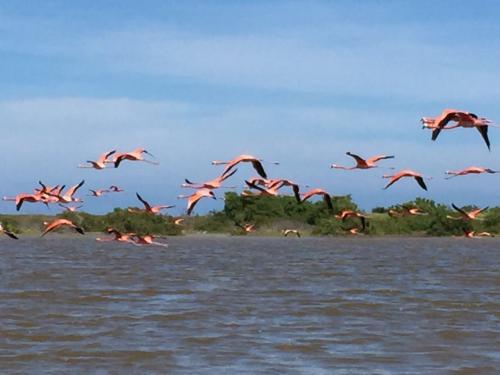 ピンクレイクツアーのボートツアーで遭遇するフラミンゴの集団。フラミンゴが飛ぶ姿ってなかなか見ることが出来ませんが、とても優雅で美しいですよ。<br /><br />ちょうどこれから営巣の時期に入りますので、数が増えて来ます(^^)
