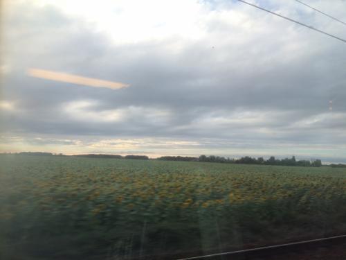 世界の車窓から。<br /><br />といっても夏のフランスはひまわりと小麦畑だらけ。<br />