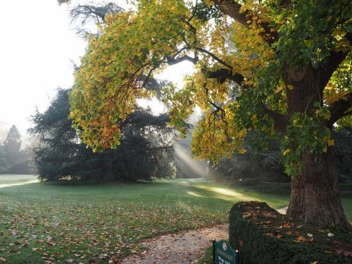 朝の時間、まだ太陽は低い位置にあり、木漏れ日からそれを感じることができた。