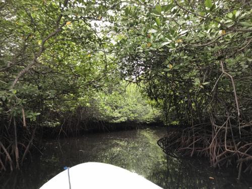 さて、バイクで向かった最初の観光ポイントはマングローブフォレスト。小舟でマングローブの林の中を巡ります。<br />進んでいる所は川ではありません。海です。<br />心なしか、酸素が濃ゆい気がします。