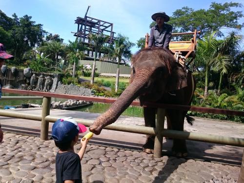 象乗りまで時間があったので、えさをあげたり写真撮ったり。<br />えさRp60k。<br /><br />お客さんはほぼ国外の観光客。<br />なので、えさもジュースも高いです。