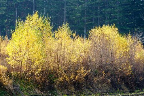 日も射して秋真っ盛り