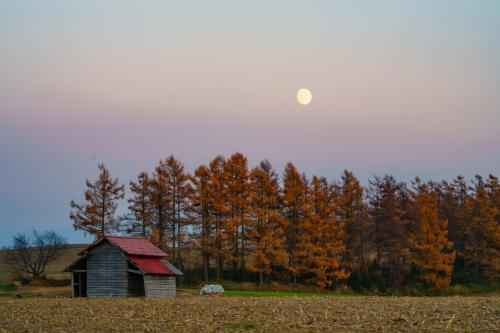 何となく夕方になって月も顔をだしてきました<br />いつもの小屋も間近で見ると、結構壊れそうな状態です