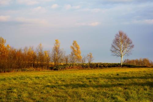 一瞬少しだけスペードの木に日が射してくれました
