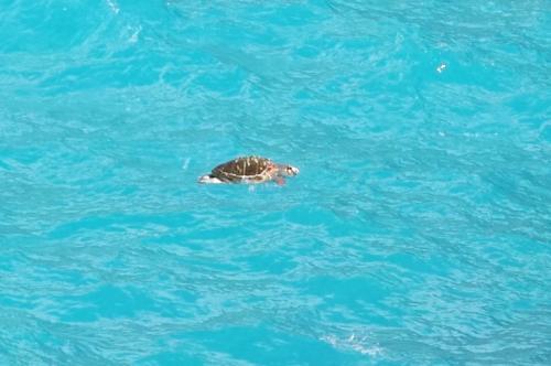 ☆Greece-Zakynthos★<br /><br />「Elation」<br />よく見ると亀が泳いでいる??というかは荒波に漂流している。シップレックビーチは亀の産卵地らしいので、我々と同じく、亀もこちらのビーチに迷い込んできたんやろうか。