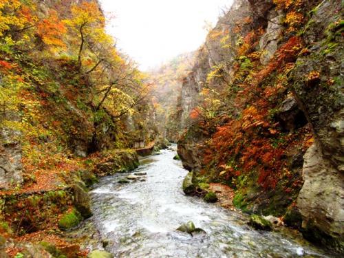 レストハウス手前から坂道を下りていくと、鳴子峡を眺める場所に行くことができます。鳴子峡は大谷川が浸食して形成された峡谷で、落葉広葉樹が多く茂っています。