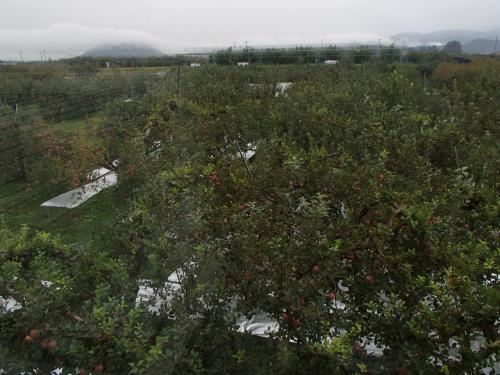 カフェから果樹園の眺め。