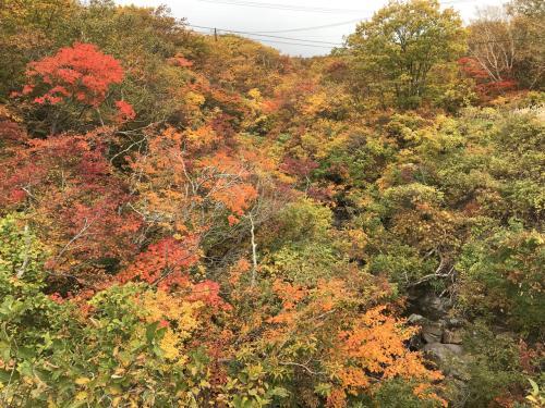 どんどん登っていくに連れて紅葉が綺麗な景色に。