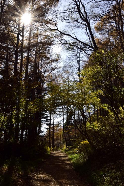 ・・・でもちょっとその前に<br />紅葉真っ盛りな奈良井宿の風景をそのまま素通りしてしまいまして、先ずは鳥居峠に繋がる山道をえっちらおっちらと登っていきます