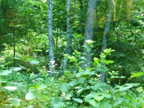 大きく取られた窓からは森が眺められます。<br /><br />木の後ろに隠れてよく見えませんが、水車があって、ゆっくりと回っていました。
