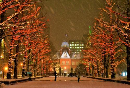 ☆札幌市北3条広場(アカプラ)会場<br />雪が突然にハゲしくなったところで、<br />期待の「赤」が点灯。<br />この街路樹は北海道最古のイチョウ並木で、<br />秋には黄色が鮮やかなんですがー、<br />モミジだとこんな感じかも。