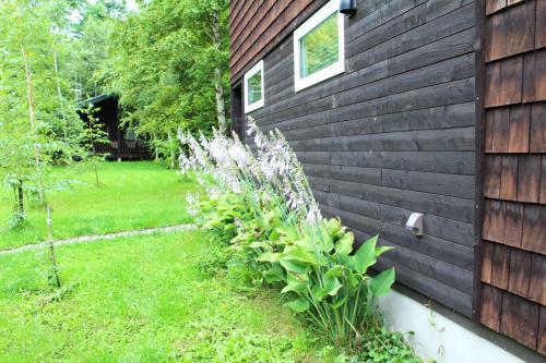 キャビンの外壁に沿うようにギボウシが咲いています。
