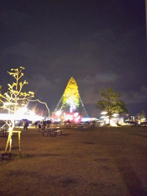 富山から来たツリー