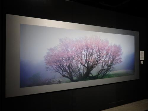 妖艶な桜が幻想的。