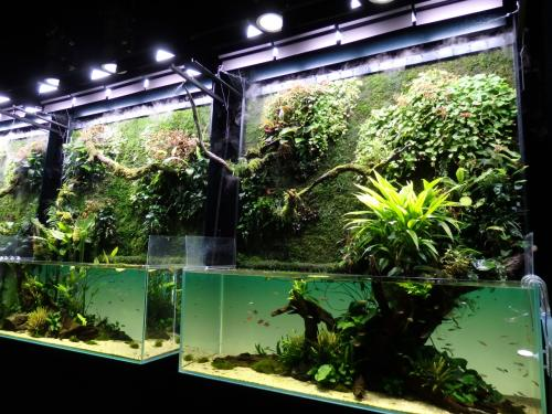 壁面にも植物が配置されている、この展覧会のために製作された特別水槽「巨大ネイチャー水草ウォール」