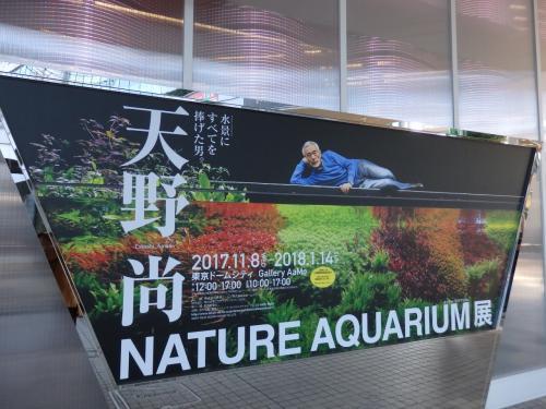 招待券をもらったので、友人とやってきた東京ドームシティ・ギャラリーアーモ「天野 尚 NATURE AQUARIUM展」<br /><br />ネイチャーアクアリウムを提唱した水景クリエイター、故・天野尚氏の展覧会です。券を貰ったものの、ネイチャーアクアリウムって何…?と、その言葉さえ知らず、どんな内容かもわからなかった私ですが、、フォートラでこちらの展覧会の様子を知ることができ、楽しみにやってきました!<br />(みみききさん、ありがとうございます♪)<br /><br />入場する前に、まずは目の前の東京ドームホテルでランチを^^