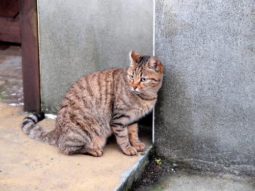 炭鉱エリアにも猫ちゃんはいました