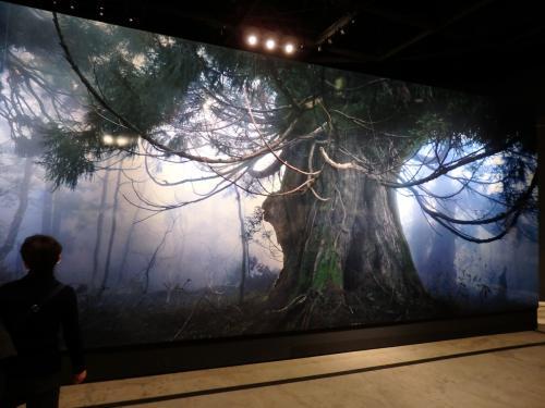 2008年7月開催のG8北海道洞爺湖サミットの会場に飾られた佐渡原始杉の超特大写真パネル。<br /><br />近くにいらした方が映りこんでしまいましたが…近づくと実際に木の側にいるような臨場感がある。ここまで大きく引き伸ばしても繊細に描写できるのが大判フィルムカメラの力ということなのでしょうか。