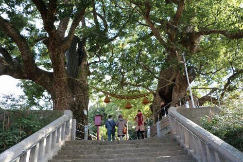 正面から巨大な楠木を眺めるとこんな感じです。<br />この大きな木からパワーをもらえそうです。