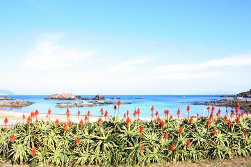こちらはアロエの花。<br />これも初めてみました!<br />花言葉は「健康」とか「万能」だそうで。<br />12月に撮った写真だというのに、まるで南国ですね。