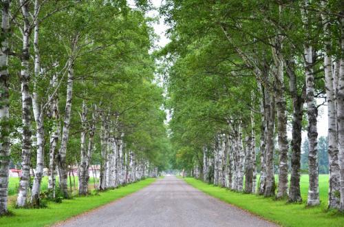 どこまでも続く並木道~。<br /><br />そう、ここはNHK連続テレビ小説「マッサン」のロケで使われた場所。<br />マッサンとエリーが手をつないで走ったのがここです。
