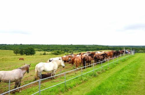 展望台の周囲は馬が放牧されていました。<br /><br />こんなに広い牧草地なのに、なぜか馬たちは柵の近くにかたまっている。