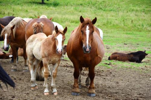 親子?<br /><br />お母さん馬(?)、とっても恰幅がいい。