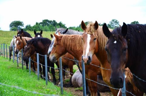 なぜか横一列に並んでる馬たち。<br />右端の2頭、カメラ目線。<br /><br />お馬さんたちにさよならして、然別湖へ向かいます。