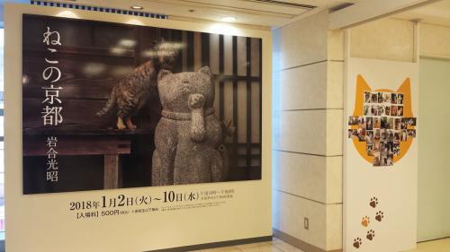 猫の名前はエキちゃん。ステーションのエキです。<br />京都駅の美術館でこの陶芸家さんの展示会をやっていた時に迷い込んできた猫だそうです。この写真の撮影場所はその陶芸家さんの記念館だそうです。