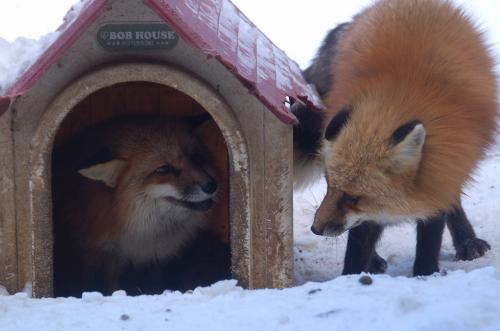 じゃれあっているのか、ケンカをしているのか、二匹が出会うとしょっちゅうケンカをしていた。