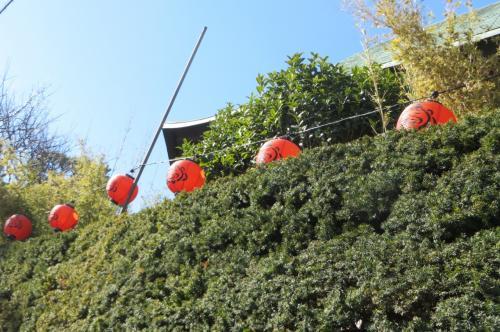 本覚寺が近づいてきました、恵比寿さんの提灯が下がってます
