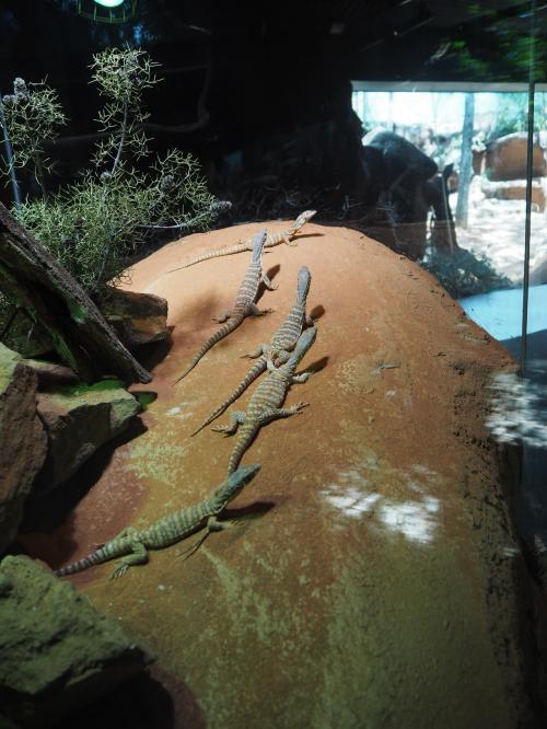 爬虫類は好きな部類。