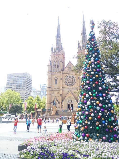 暑い気温の中、クリスマスツリーが一緒に飾ってあるのが、夏のオーストラリアって感じですね。