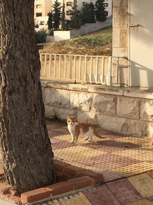 ヨルダン観光もいよいよ最終日です。<br />朝はホテル周辺を散策しました。<br />可愛い猫ちゃんを発見しました!<br />ニャー!