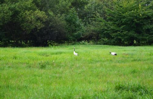 牧場の敷地内を車で走っている途中、鷺のつがい(?)に出会いました。