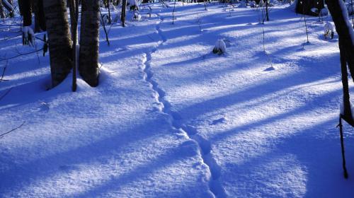 そうそう、園内mapの他に、動物の足跡のイラストももらっていて、見つかるといいですねとは言われていたんだけど、なかなか見つけられず。<br /><br />もしかしたらこれがそう?