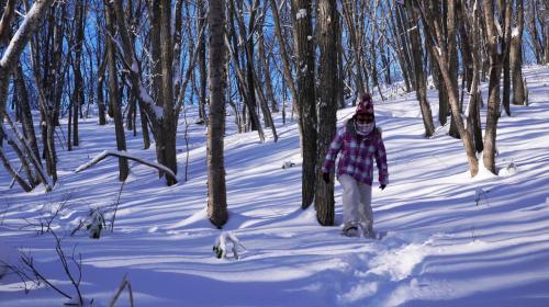こんな林のなか、雪がないときはなかなか歩くことが出来ないけど雪があるとどこまででも歩いて行けちゃう。<br /><br />これが冬の遊びだよね~。
