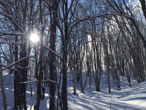 朝の10時半。<br /><br />林の木々の間からさすおひさまのひかりがきれい~。