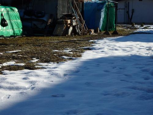 あまりにも誰も歩いていないので、かなり不安!<br />ちょうど近くに止まった宅配便のおねえさんに<br />「神社に行くんですがこの道合ってますか?」と聞いたら、正面のほそーい道をまっすぐですよ、と・・<br />道はあってるみたい・・。<br /><br />細い道は雪が残って凍ってるので、慎重に慎重に・・・・<br /><br />あ!