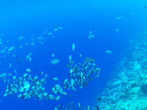 魚群も沢山見れます。
