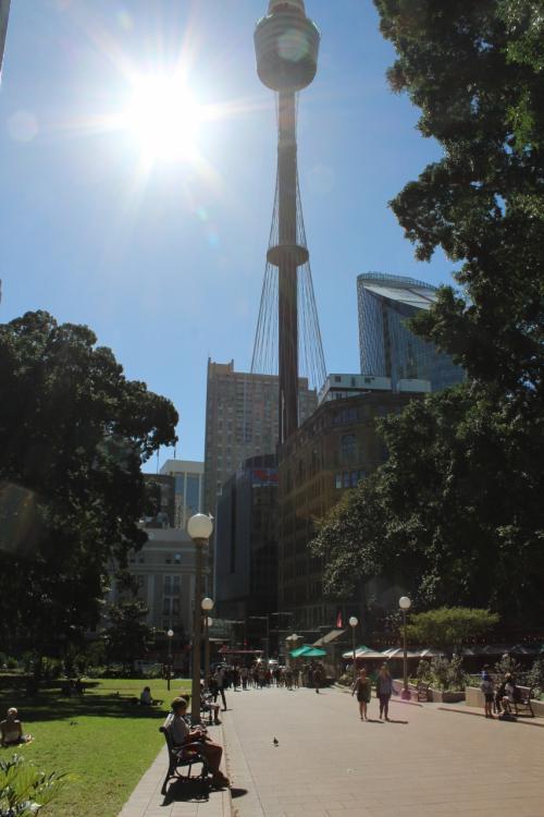 ハイドパークから見たシドニータワー。<br />シドニーの中心街はとてもコンパクトで、歩きで十分いろんなところに行けてしまいます。