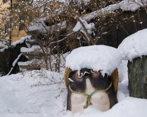 玄関脇の狸の置物も雪の綿帽子をかぶっている。