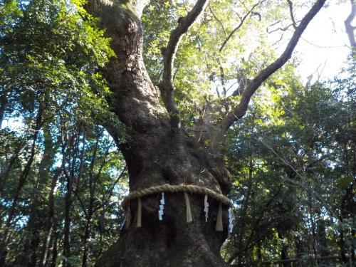 大きな楠も多いです。