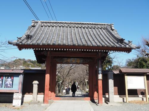 称名寺 赤門<br /><br />2月7日です。<br /><br />京急金沢文庫駅から徒歩15分ほど。<br />赤門を潜ると参道は桜並木です。