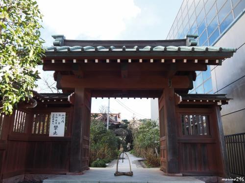 大巧寺<br /><br />JR鎌倉駅から一番近い寺、庭もよく手入れがされており、いつもお邪魔しています。