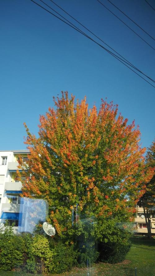 途中の車窓からは、色づいた木が旅情を掻き立てますv^o^)<br />ローカル線だから出会う風景もあるさ!?と開き直り(笑)