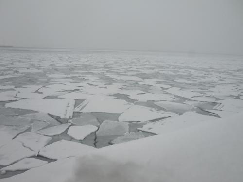 今年は紋別にも流氷が接岸し、港内も流氷でびっしりでした。<br /> 流氷はたくさんの恵みをもたらします。6月頃、紋別港でまがれいがたくさん釣れるのでないかと楽しみです。そんなことを考えてしまいました。