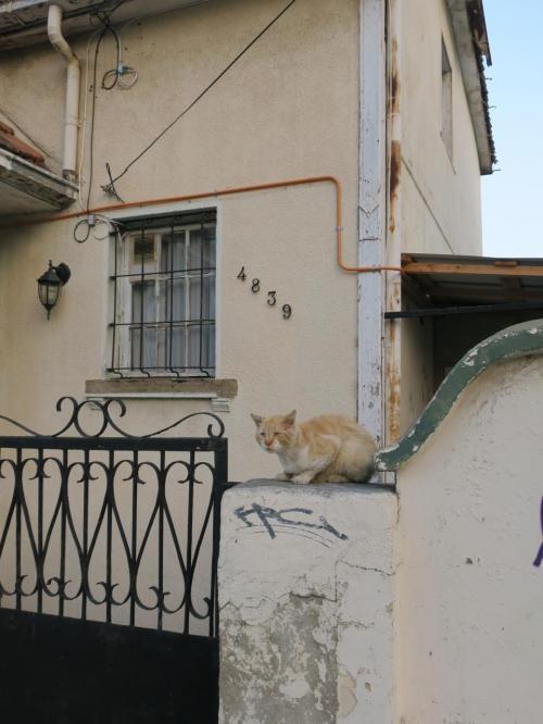 ネコその1 民家のある通りを歩いているとネコ発見。ユーモラスな顔立ちにおもわず一枚。このあと次々にネコに遭遇します。